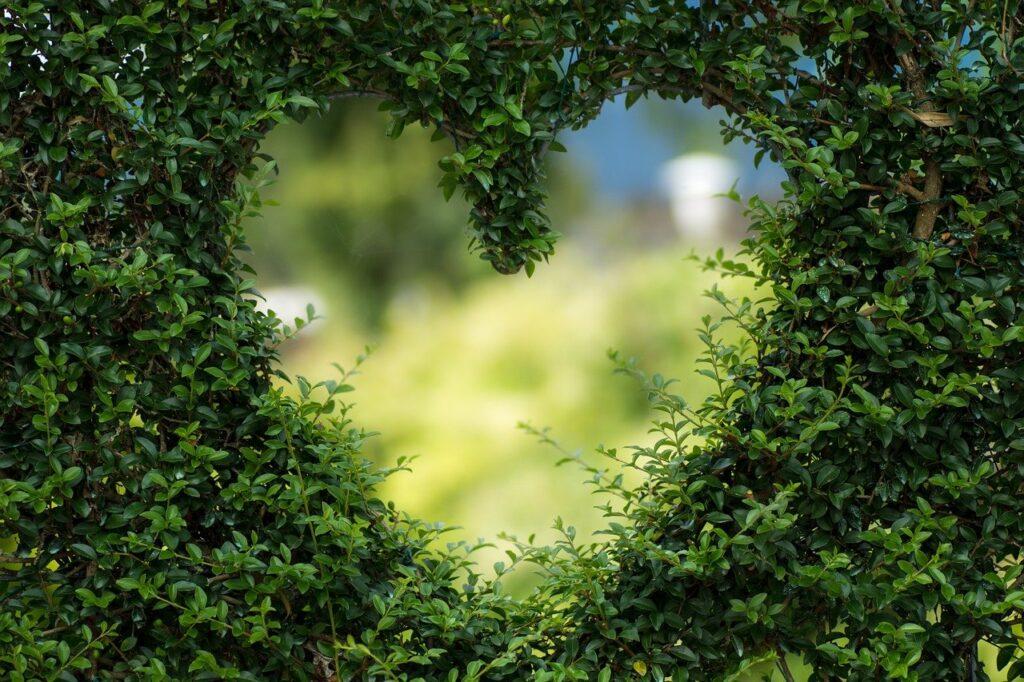 heart, leaves, foliage
